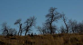 Schattenbild von baren Winterbäume Lizenzfreies Stockfoto