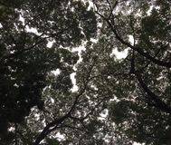 Schattenbild von Baum-Blättern gegen den Himmel stockfotografie