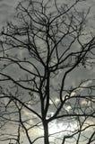 Schattenbild von Baumasten Lizenzfreie Stockfotos