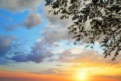 Schattenbild von Baumasten mit buntem Sonnenunterganghimmel Stockbilder