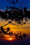 Schattenbild von Baumasten mit Sonnenunterganghimmel Stockfotos