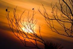 Schattenbild von Baumasten mit Sonnenunterganghimmel Lizenzfreie Stockbilder