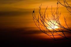 Schattenbild von Baumasten mit Sonnenunterganghimmel bei Phukradueng Natio Lizenzfreie Stockfotografie