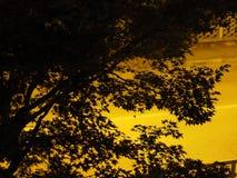 Schattenbild von Baumblättern Lizenzfreies Stockbild