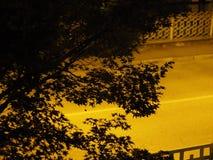 Schattenbild von Baumblättern mit Kopienraum Stockbilder