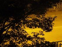Schattenbild von Baumblättern mit Kopienraum Lizenzfreies Stockbild