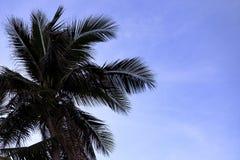 Schattenbild von Blättern von Kokosnusspalmen auf dem Strand Stockfotografie