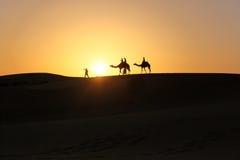 Schattenbild von den Kamelen, die in Wüste während des Sonnenuntergangs gehen Lizenzfreie Stockfotografie