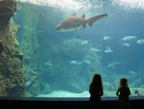 Schattenbild von den kleinen Mädchen, die einen Haifisch in einem Aquarium aufpassen Stockbild