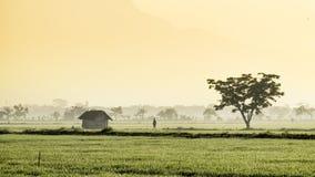 Schattenbild von den Leuten, die mitten in beträchtlichem Reisfeld gehen Lizenzfreies Stockbild