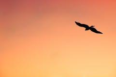 Schattenbild von einsamem Eagle Hovering im Sonnenuntergang-Himmel Stockfoto