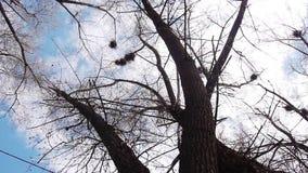 Schattenbild von Fliegenkrähen stock video footage