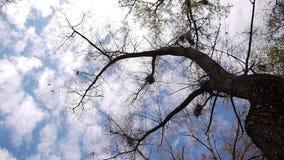 Schattenbild von Fliegenkrähen stock video