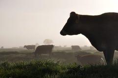 Schattenbild von Jersey-Kühen Lizenzfreie Stockfotografie