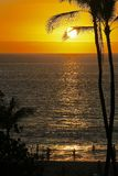 Schattenbild von Kokosnussbäumen Stockfotos