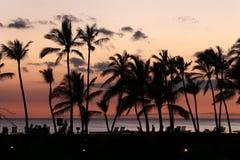 Schattenbild von Kokosnussbäumen Lizenzfreie Stockbilder