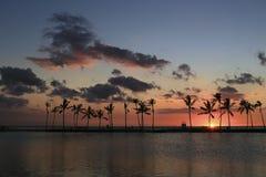 Schattenbild von Kokosnussbäumen Lizenzfreie Stockfotografie