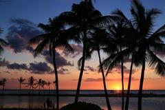 Schattenbild von Kokosnussbäumen Stockbilder