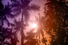 Schattenbild von Kokosnussbäumen stockfotografie