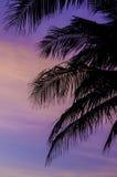 Schattenbild von Kokosnussbäumen mit Dämmerungshimmel Stockfotografie