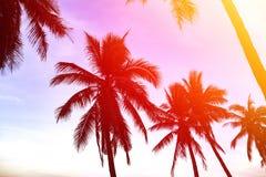 Schattenbild von Kokosnusspalmen auf dem Strand bei Sonnenuntergang Stockfoto