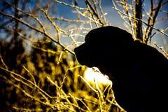 Schattenbild von Labrador retriever in Finnland lizenzfreie stockfotografie