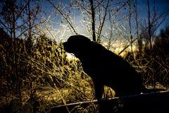 Schattenbild von Labrador retriever in Finnland lizenzfreie stockbilder