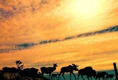 Schattenbild von Metallalaskan-Tieren Stockfotos