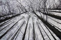 Schattenbild von Niederlassungen von Bäumen Stockbild