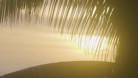 Schattenbild von Palmblättern auf einem schönen orange Sonnenaufgang auf der Insel stock video footage