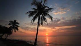 Schattenbild von Palmen auf dem Hintergrund des romantischen Sonnenuntergangs Koh Chang stock footage
