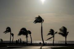 Schattenbild von Palmen am Strand lizenzfreies stockfoto