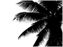 Schattenbild von Palmenniederlassungen Stockfotos