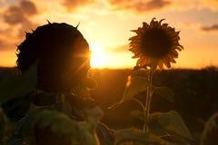 Schattenbild von Sonnenblumen auf einem Gebiet am Nachmittag Stockfotos