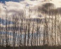 Schattenbild von Suppengrün in Folge im Winter Stockfoto