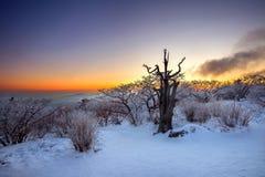 Schattenbild von toten Bäumen, schöne Landschaft bei Sonnenaufgang auf Nationalpark Deogyusan im Winter, Korea Lizenzfreie Stockbilder