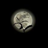 Schattenbild von Treetop auf Vollmond Lizenzfreie Stockbilder