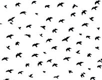 Schattenbild von Vögeln Lizenzfreie Stockfotografie