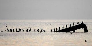 Schattenbild von Vögeln auf Rohr Lizenzfreie Stockfotos