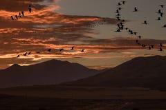 Schattenbild von verschiedenen Vögeln während der Migration während des Sonnenuntergangs stockbild