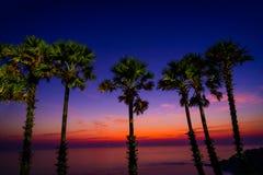 SchattenbildArengapalmebäume auf Strand in der Dämmerung Lizenzfreie Stockbilder