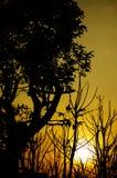 Schattenbildbäume mit Sonnenuntergang Stockfoto