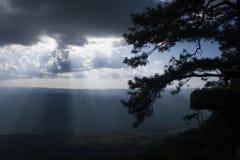 Schattenbildbaum auf Gottlichthintergrund lizenzfreies stockbild