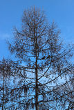 Schattenbildbaum auf Hintergrund des blauen Himmels Lizenzfreie Stockfotografie
