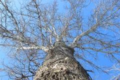 Schattenbildbaum auf Hintergrund des blauen Himmels Lizenzfreie Stockbilder