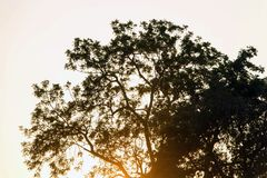 Schattenbildbaum bei Sonnenuntergang lizenzfreie stockfotografie
