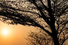 Schattenbildbaum bei Sonnenuntergang Stockbild