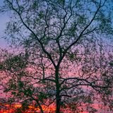 Schattenbildbaum mit rotem buntem Himmel stockbild