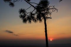 Schattenbildbaum mit Sonnenuntergang Stockbild