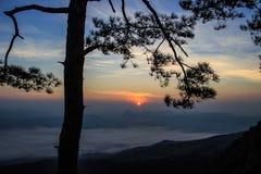 Schattenbildbaum mit Sonnenuntergang Stockfotografie